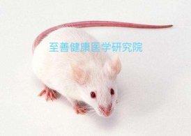早老SAMP8小鼠SAMR1小鼠价格低保质保量