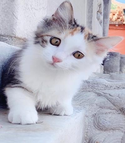 动物猫咪狗狗宠物克隆服务收费费用价格低保质保量
