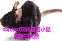 APPps1小鼠(APP/PS1双转基因小鼠)阿尔兹海默模型